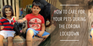 How to care for Pets during Corona